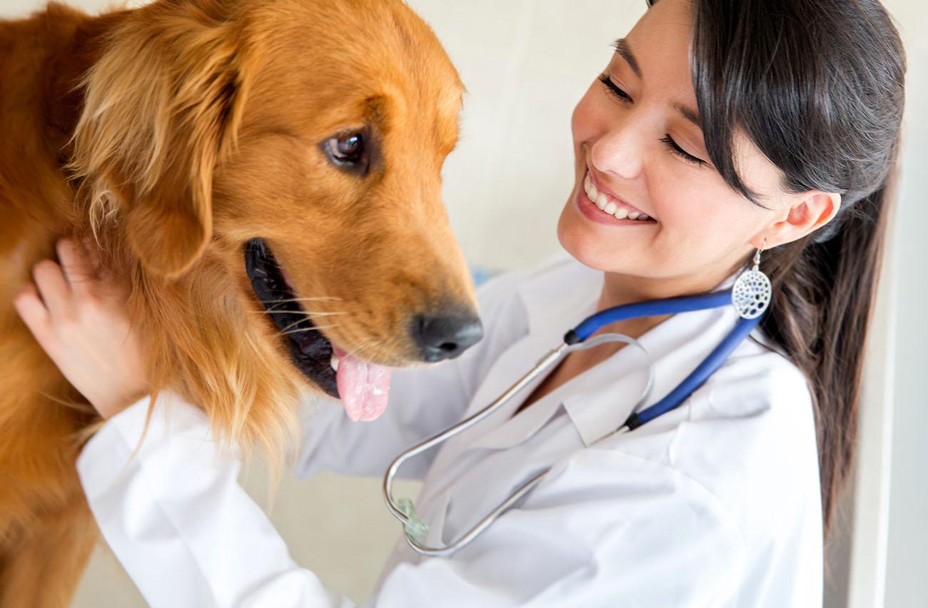 Pet Allergy Testing in Clinton Hill   Brooklyn Veterinarian