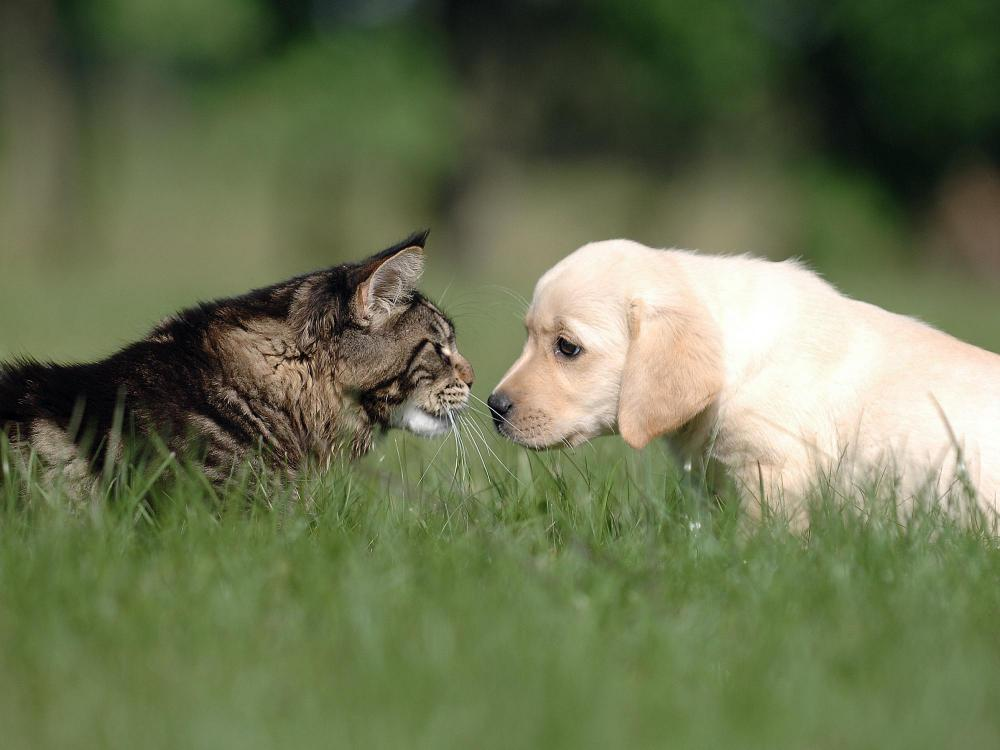 puppy and kitten evaluations from your veterinarian in brooklyn