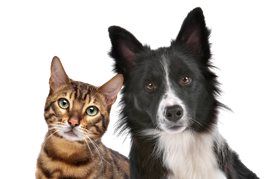 Intestinal Worms in Dogs and Cats | Veterinarian in Brooklyn